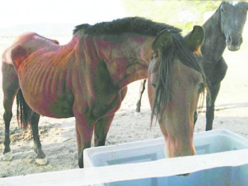 Reports of horses left to starve