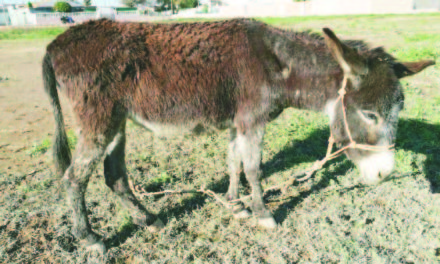 Three equines rescued