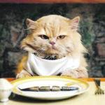 Cat Café opens in Valencia