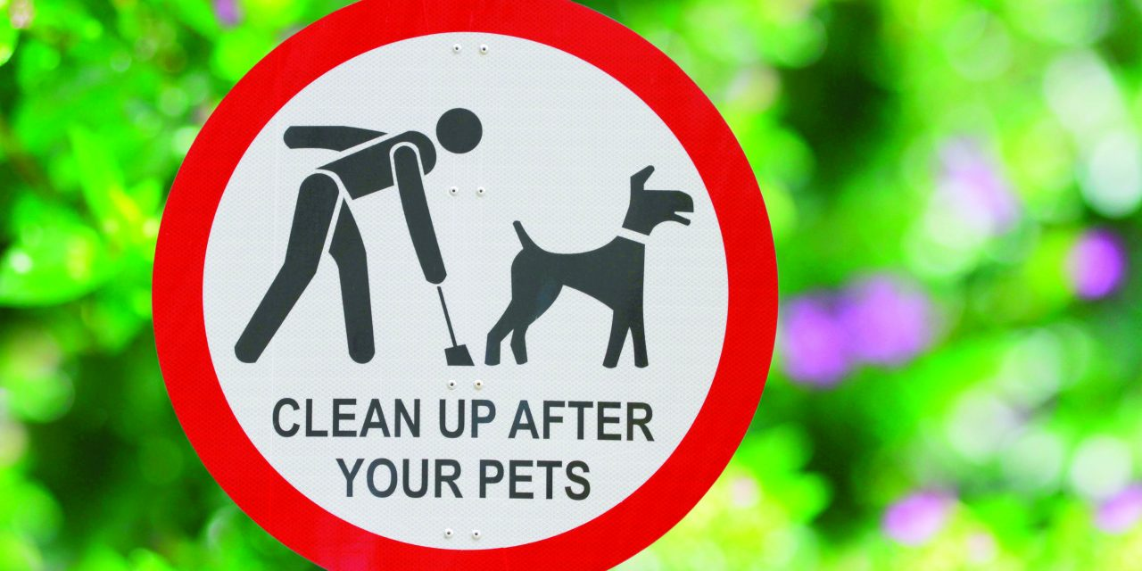 Campaign to rid the streets of dog poo