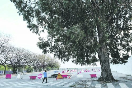 A happy ending in sight for the cemetery tree