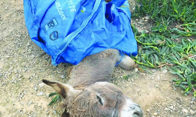 Death of baby donkey inspires incredible kindness