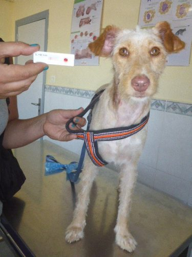 Help home a young orphaned dog