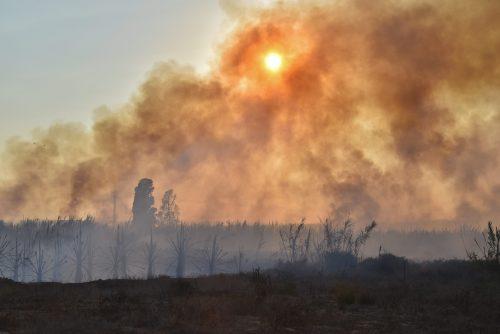 Fire causes devastation