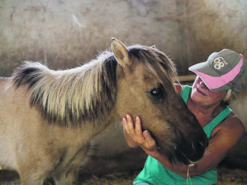 Spanish equine sanctuary rescues yet another skeletal pony, confirming disturbing trend