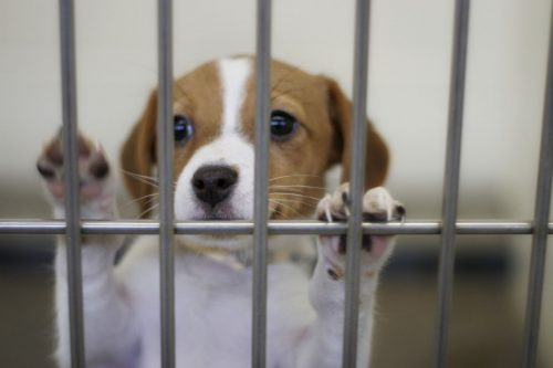Open day for the animal shelter