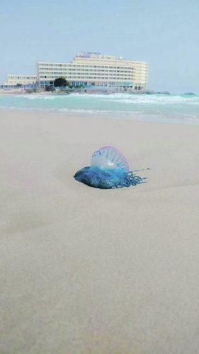 Costa Blanca beach shut after Portuguese Man O War sighted