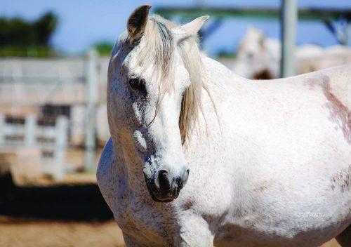 Help horses thrive