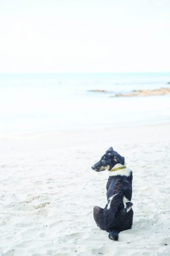 Beach for dogs will continue