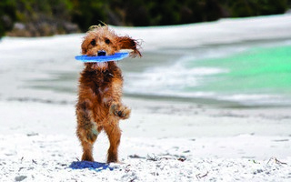 Decision delayed on beach for dogs