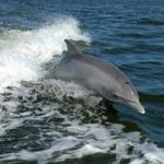 Dead dolphin found in Torrevieja