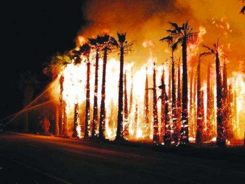 Arsonists believed responsible for Elche palm attacks