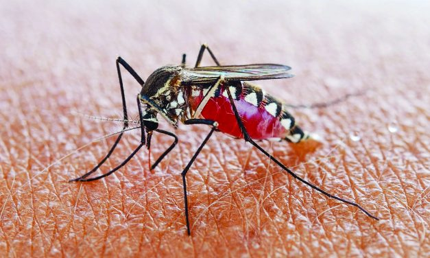 Summer means Mozzies